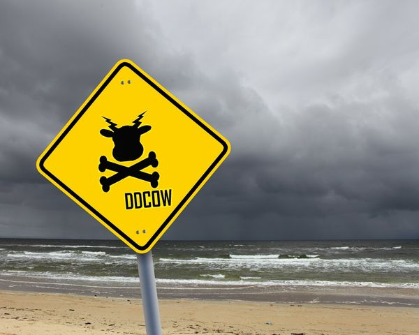 DDCOW at the beach